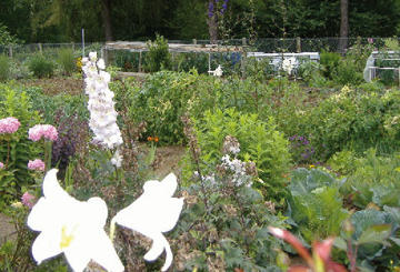 Jardins familiaux arras fr for Jardin familiaux